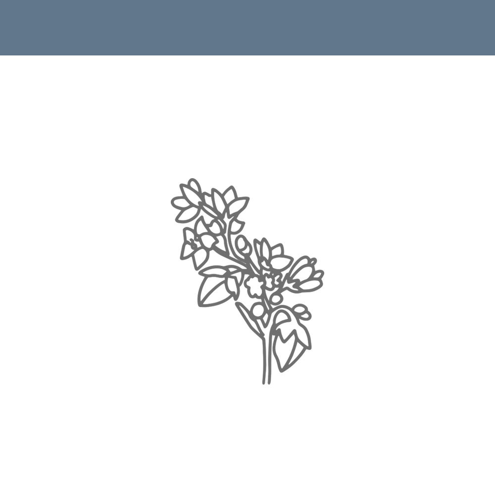 Farine de<br>sarrasin